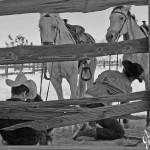 Anthony-Doug-horses-fence ©2012 Mister Freedom®