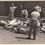 Fishermen 1950's (MF® private collection)